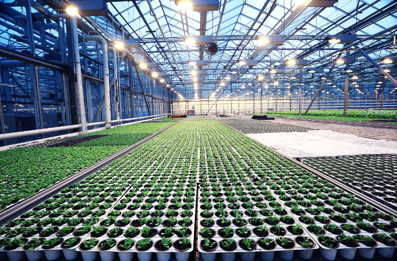 Solar greenhouse interior