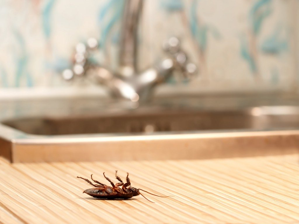 Dead cockroaches in an apartment house on the background of the water faucet.