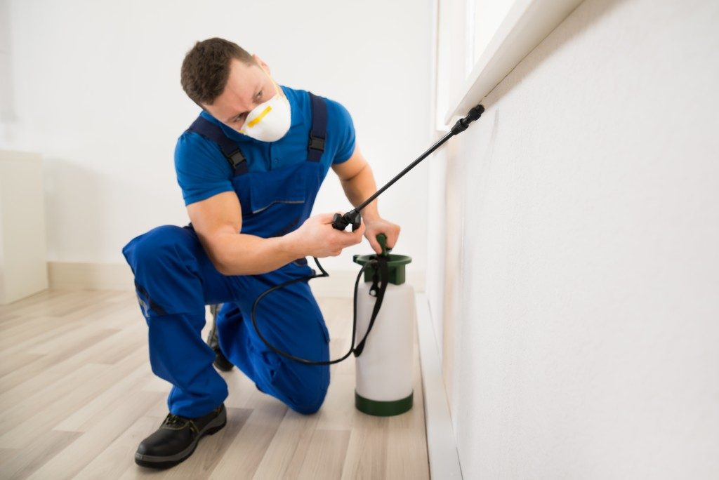 Exterminator spraying chemical pesticide to kill the cockroaches