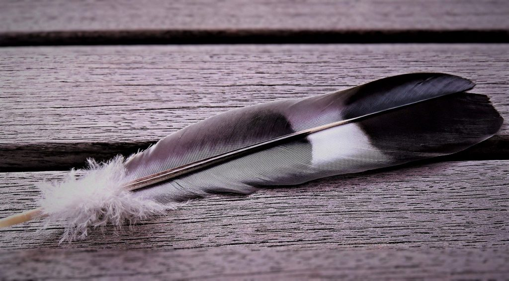 white, black and grey coloured feather