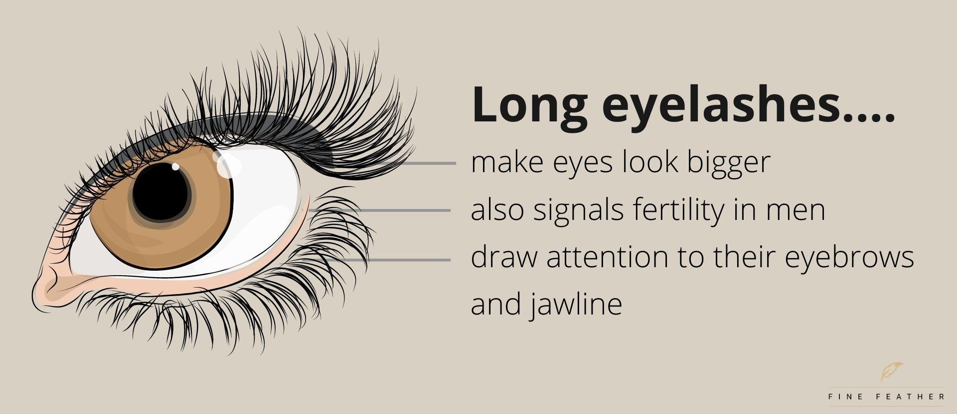 long eyelashes facts