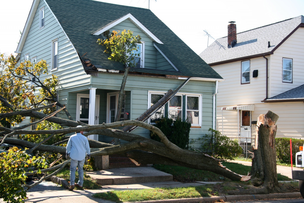 Tree fell down in front of house