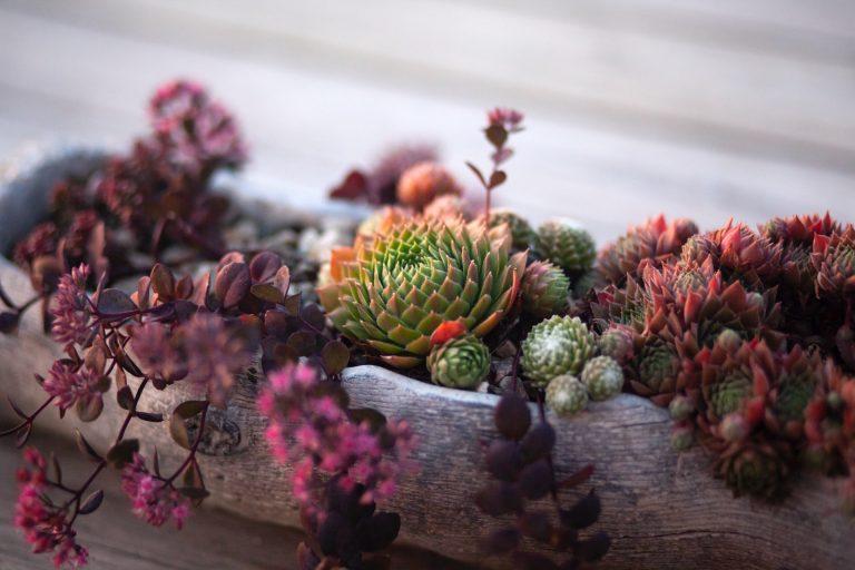 succulent-in-a-pot