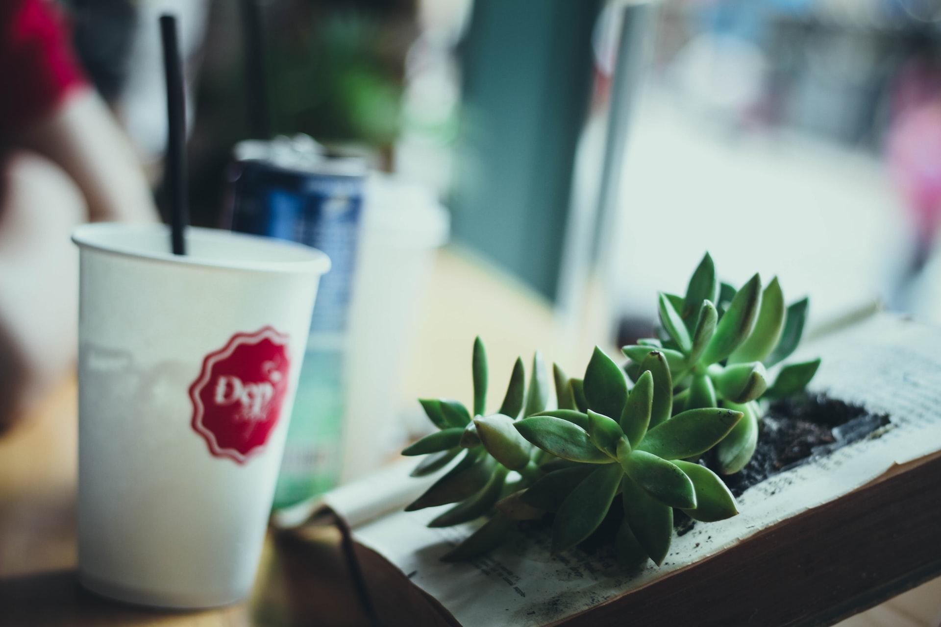 succulent-near-a-cup