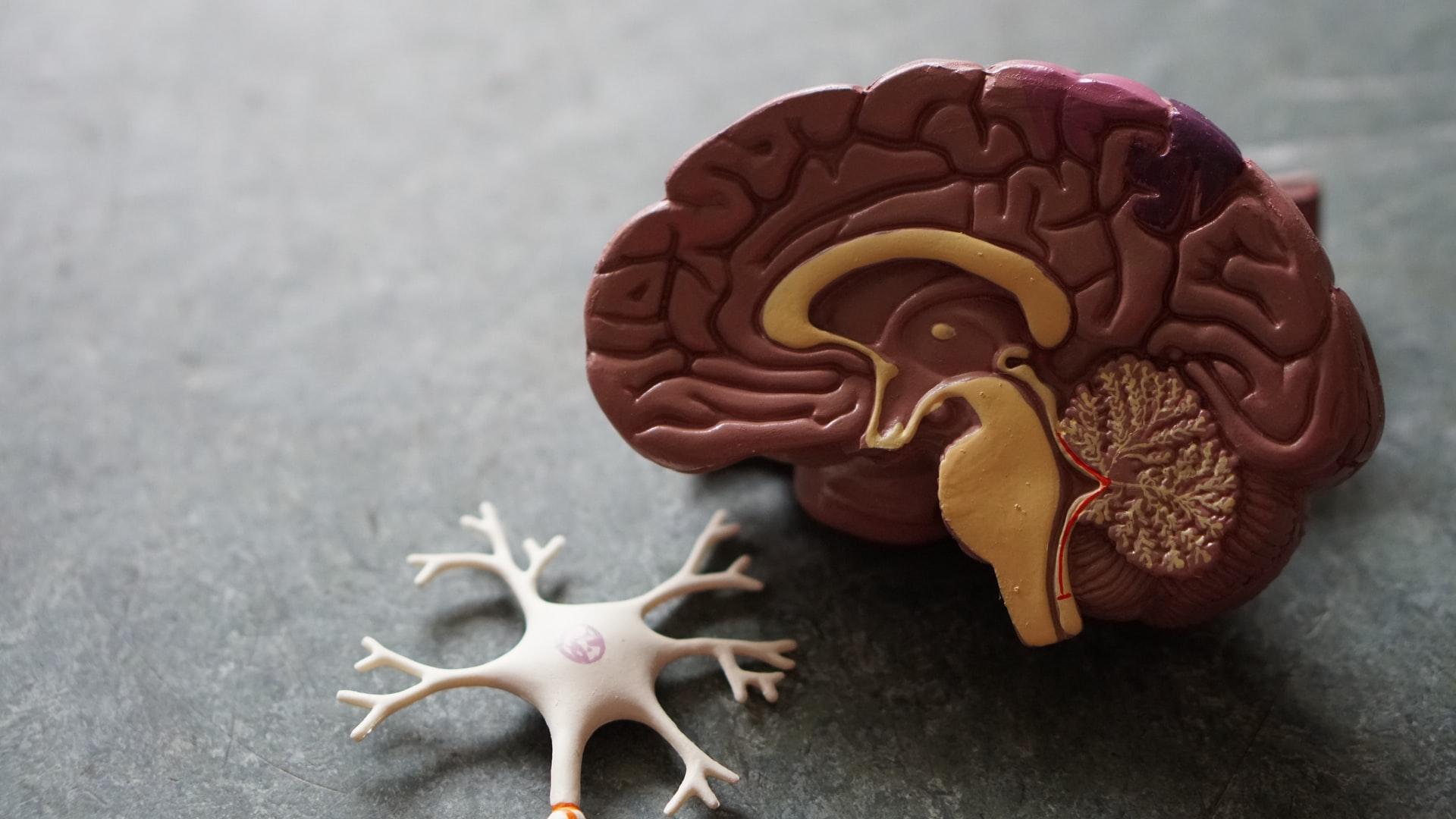 figure-of-a-brain
