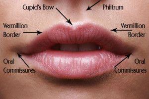 lip-anatomy