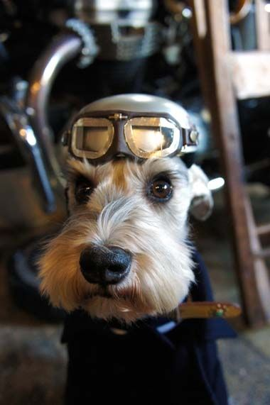 dog wearing airforce pilot gear