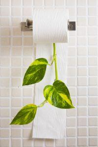 eco-friendly tissue